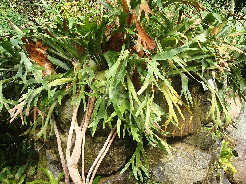 las 10 especies que mejor funcionan en jardines verticales