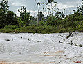 Podzol Guyane MASSEMIN 2011 (2).jpg