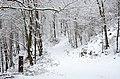 Poertschach Glorietteweg Ostteil 28012014 236.jpg