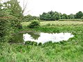 Pond in cattle pasture - geograph.org.uk - 1395371.jpg