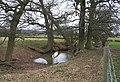 Pond near Duckswich - geograph.org.uk - 724560.jpg