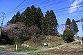 Precincts of Izusahime jinja.JPG