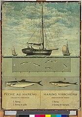 Lithograph ' Pêche au hareng / Haring Visscherij'
