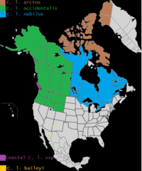 Present (as of 2015) distribution of Canis lupus in North America.png