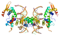 Protein FOXP2 PDB 2a07.png