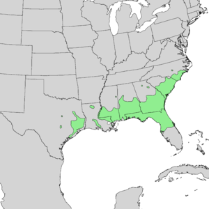 Prunus caroliniana - Image: Prunus caroliniana range map 2