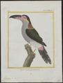 Pteroglossus piperivorus - 1700-1880 - Print - Iconographia Zoologica - Special Collections University of Amsterdam - UBA01 IZ19300250.tif