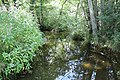 Réserve naturelle Marais Lavours Aignoz Ceyzérieu 11.jpg