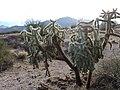 RANCHO SAN EMETERIO SONORA MEXICO - panoramio (2).jpg