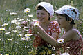 """RIAN archive 492950 Children from Young Pioneer camp """"Zvonkie Gorny"""".jpg"""