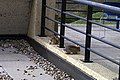 Rabbits (479352312).jpg