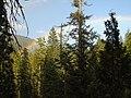 Rainbow over the trees - panoramio.jpg