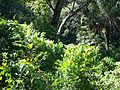 Ravine Gardens SP05.jpg