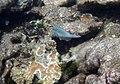 Reef 7 (4385170169).jpg