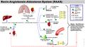 Renin-angiotensin-aldosterone system-de.png