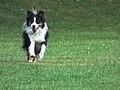 Rennender Hund.JPG
