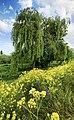 Represented tree.jpg