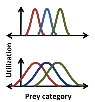 Ecological niche - Where three species eat some of the same prey, a statistical picture of each niche shows overlap in resource usage between three species, indicating where competition is strongest.
