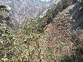 Rhododendron32.jpg