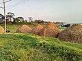 Rice by Tawhidur Rahman Dear.jpg
