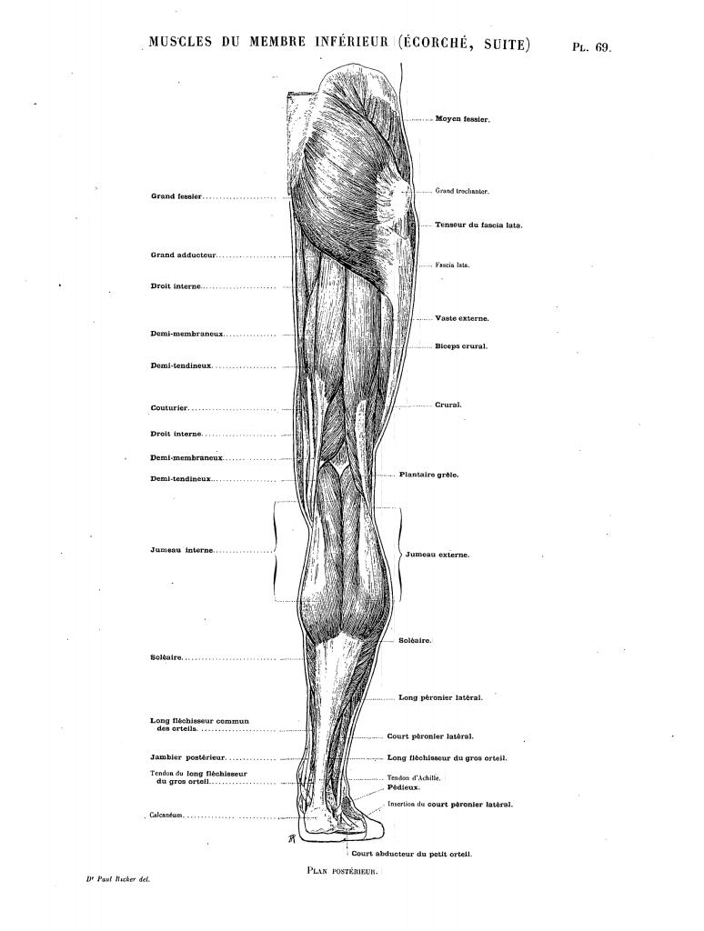 Erfreut Membran Orgel Zeitgenössisch - Anatomie Ideen - finotti.info