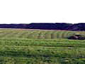 Ridge and furrow field pattern, Dunstan. - geograph.org.uk - 76249.jpg