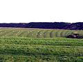 Ridge and furrow field pattern, Dunstan. - geograph.org.uk - 76249.jpg