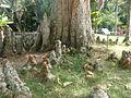 Rio de Janeiro Botanical Garden 15.JPG