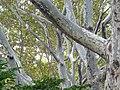 Rockefeller University - exterior trees.jpg