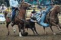 Rodeo, Kälberfangen.jpg
