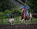 Rodeo Event Calf Roping 33.jpg