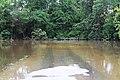 Roman Forest Flood, 4-19-16 at 2-30 PM (26256294300).jpg