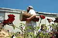 Roses in the West Bank.jpg