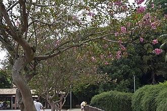 São Caetano do Sul - São Caetano's public park
