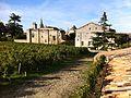 Saint Emilion vineyard.jpg
