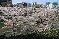 Sakura in Chidorigafuchi 20190406-3.jpg