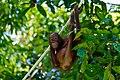 Sandakan Sabah Sepilok-Orangutan-Rehabilitation-Centre-15.jpg