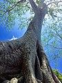 Sangkat Nokor Thum, Krong Siem Reap, Cambodia - panoramio (51).jpg