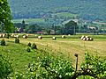 Scarperia-Landscape 3.jpg