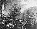 Schade, hogere planten, zwammen, aecidium elatinum, zilverspar, Bestanddeelnr 193-1002.jpg