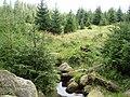 Schierke Oberharz Hochmoor - panoramio.jpg