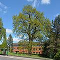 Schleswig-Holstein, Pinneberg, Naturdenkmal 03 28 NIK 3298.JPG