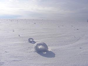 Snow roller - Image: Schneeringe 1 Foto Kathrin Spiegler