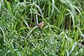 Schwärmer wie Kolibri2.jpg