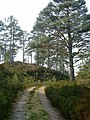 Scots pines by the track along Loch Beinn a Mheadhoin - geograph.org.uk - 170041.jpg