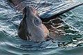 Seal (19370750373).jpg