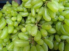 Seedless grapes of Kallidaikurichi