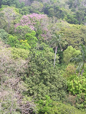 Forests of Mexico - Rainforest canopy at the Parque-Museo La Venta (open-air museum of La Venta).