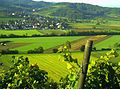 September Golden Morning Sun Heuweiler Town - Master Mythos Black Forest Photography 2014 Weinlese - panoramio.jpg
