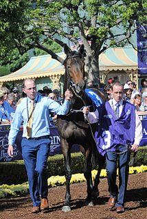 Seventh Heaven (horse) Irish-bred Thoroughbred racehorse